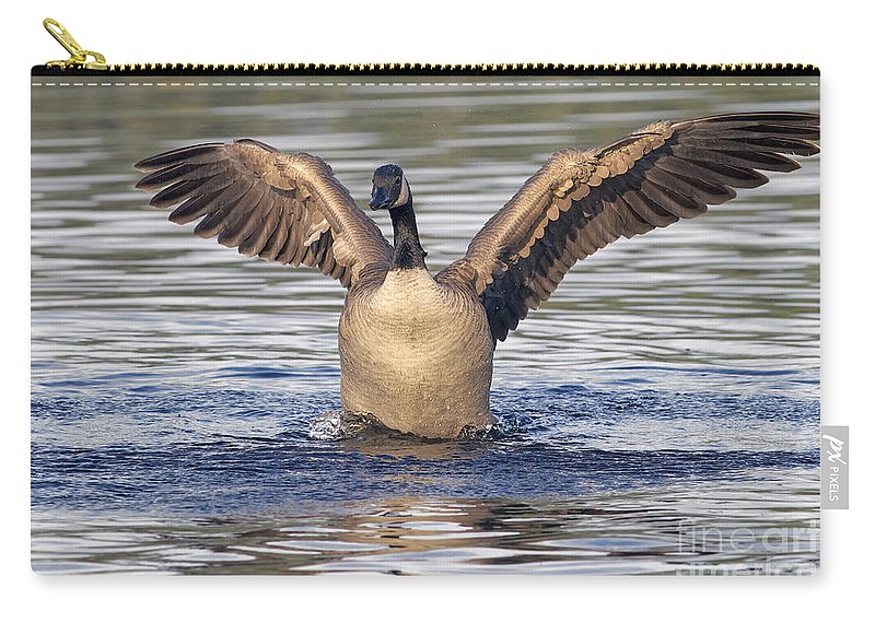 Canada Goose Carry-all Pouch featuring the photograph Gooseflapping 3 by Sharon Talson