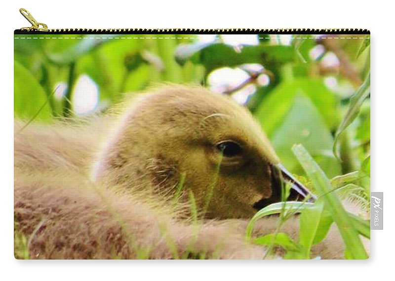 Nature Carry-all Pouch featuring the photograph Gosling Sleep by Art Dingo