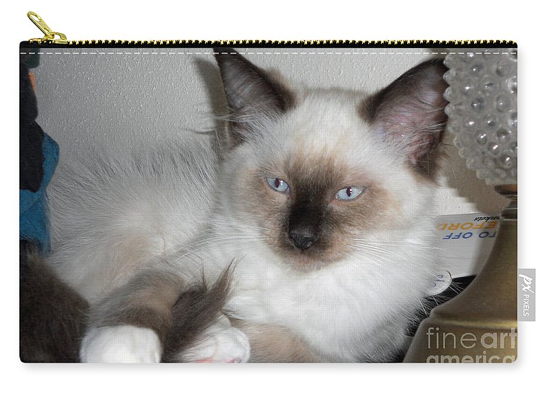 Cat Carry-all Pouch featuring the photograph Got It by Nancy L Marshall