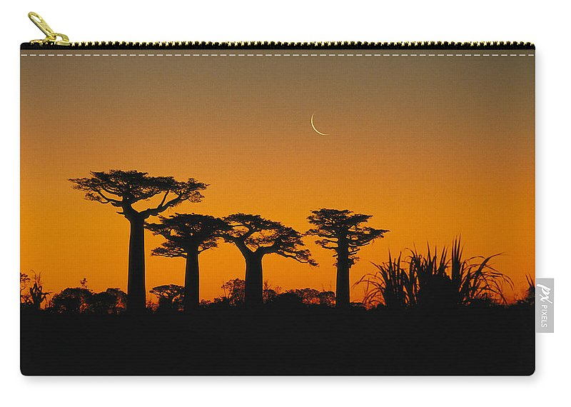 Feb0514 Carry-all Pouch featuring the photograph Grandidiers Baobab Trees And Moon by Konrad Wothe
