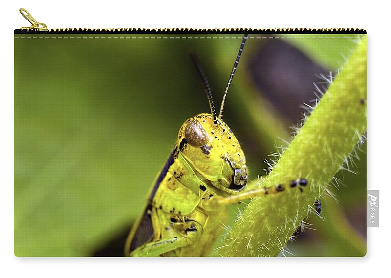 Grasshopper Carry-all Pouch featuring the photograph Grasshopper Macro 9402 by Bonfire Photography