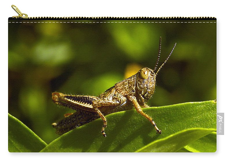 Grasshopper Carry-all Pouch featuring the photograph Grasshopper Macro by Bonfire Photography