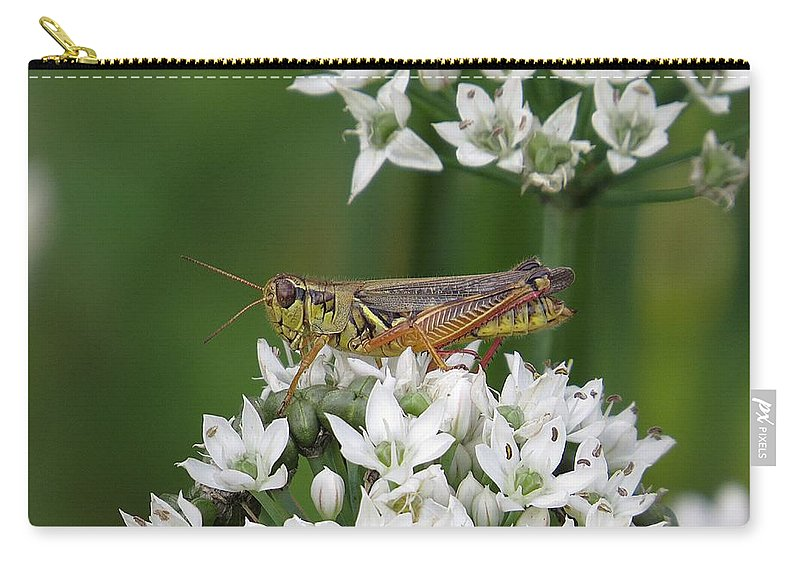 Grasshopper Carry-all Pouch featuring the photograph Grasshopper On Garlic Chives by MTBobbins Photography