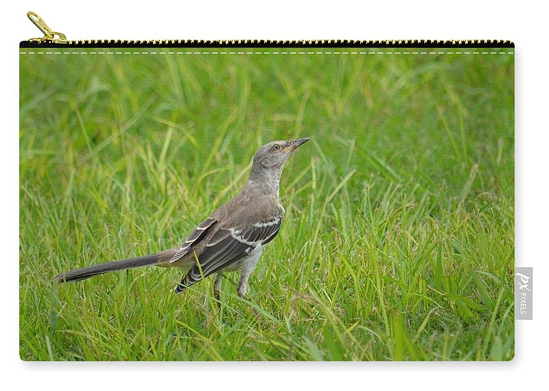 Gray-eyed Catbird Ii Carry-all Pouch featuring the photograph Gray-eyed Catbird II by Maria Urso