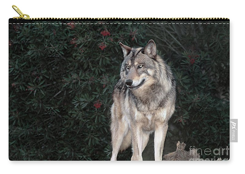 Gray Wolf Carry-all Pouch featuring the photograph Gray Wolf Endangered Species Wildlife Rescue by Dave Welling