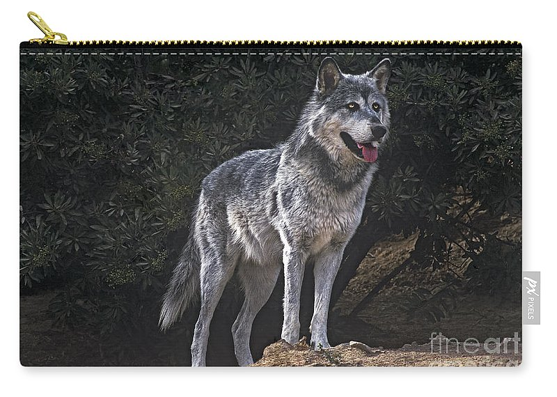 Gray Wolf Carry-all Pouch featuring the photograph Gray Wolf On Hillside Endangered Species Wildlife Rescue by Dave Welling