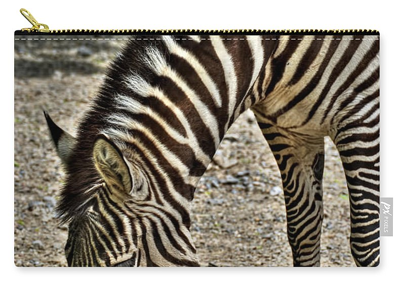 Zebra Carry-all Pouch featuring the photograph Grazing Zebra At The Buffalo Zoo 2 by Michael Frank Jr