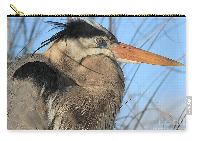 Gulf Islands National Seashore Carry-all Pouch featuring the photograph Great Blue Up Close by Adam Jewell