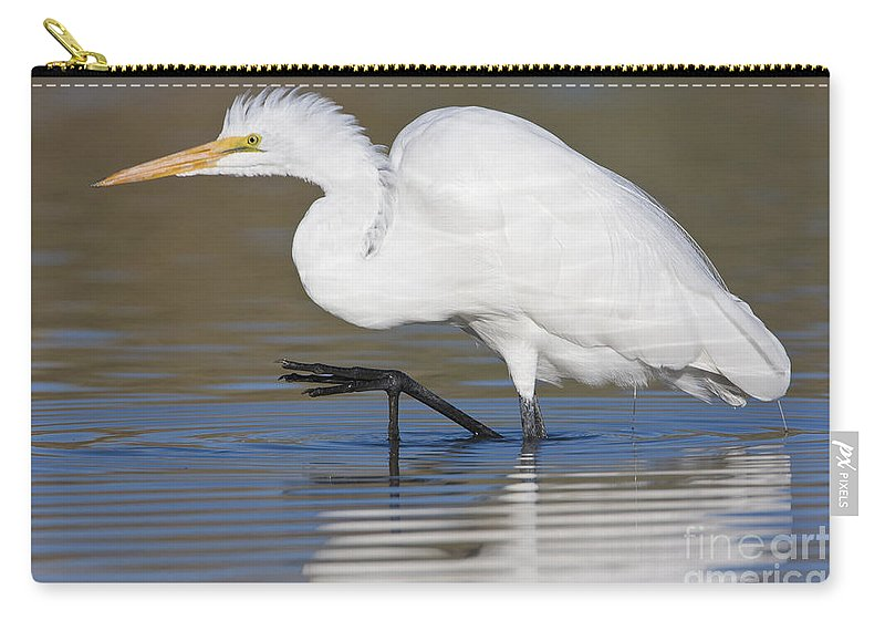 Great Egret Carry-all Pouch featuring the photograph Great Egret With Leg Up by Bryan Keil