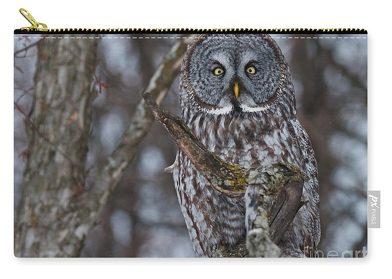 Carry-all Pouch featuring the photograph Great Gray Owl by Cheryl Baxter