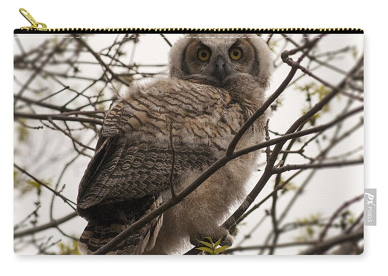 Great Horned Owlet Carry-all Pouch featuring the photograph Great Horned Owlet 2 by Vivian Christopher