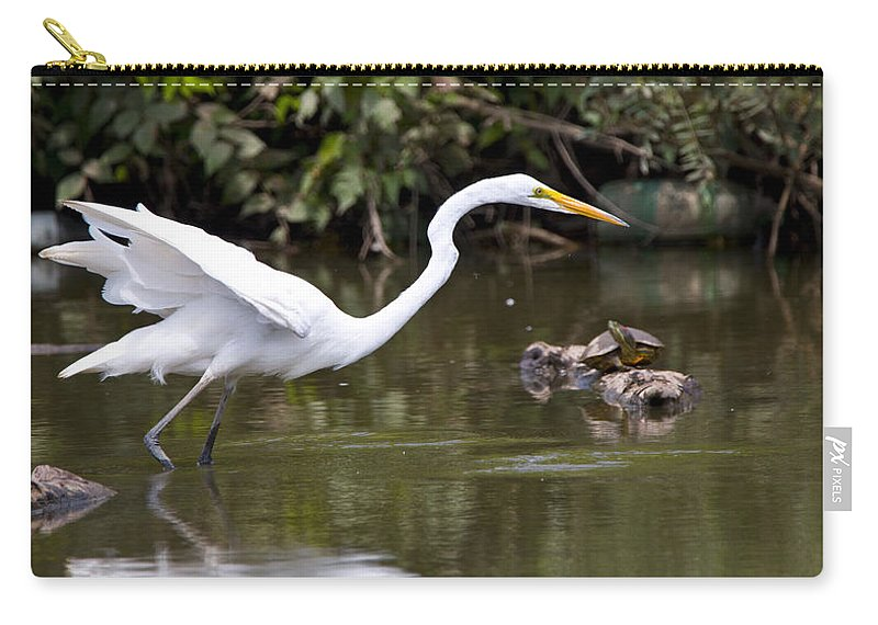 Great Blue Heron Photographs Carry-all Pouch featuring the photograph Great White Egret Looking For Fish 1 by Vernis Maxwell