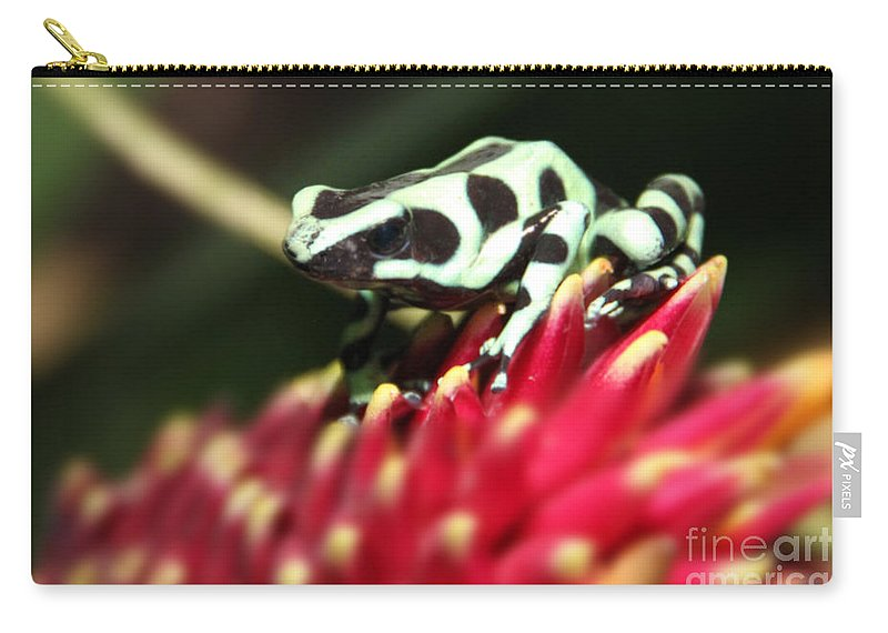 Wildlife Carry-all Pouch featuring the photograph Green And Black Poison Dart Frog by Bob Hislop