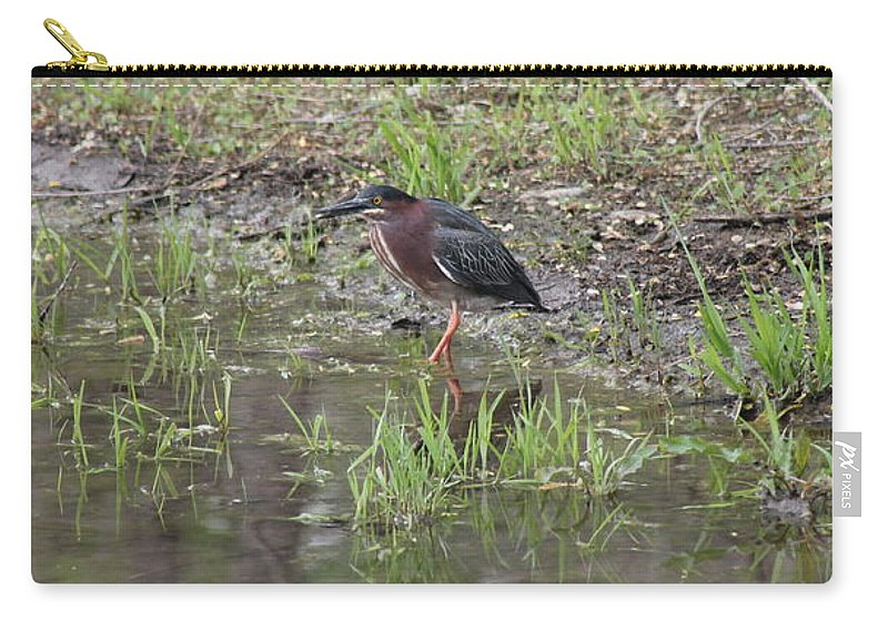 Green Heron Carry-all Pouch featuring the photograph Green Heron Along Shore by Wayne Williams