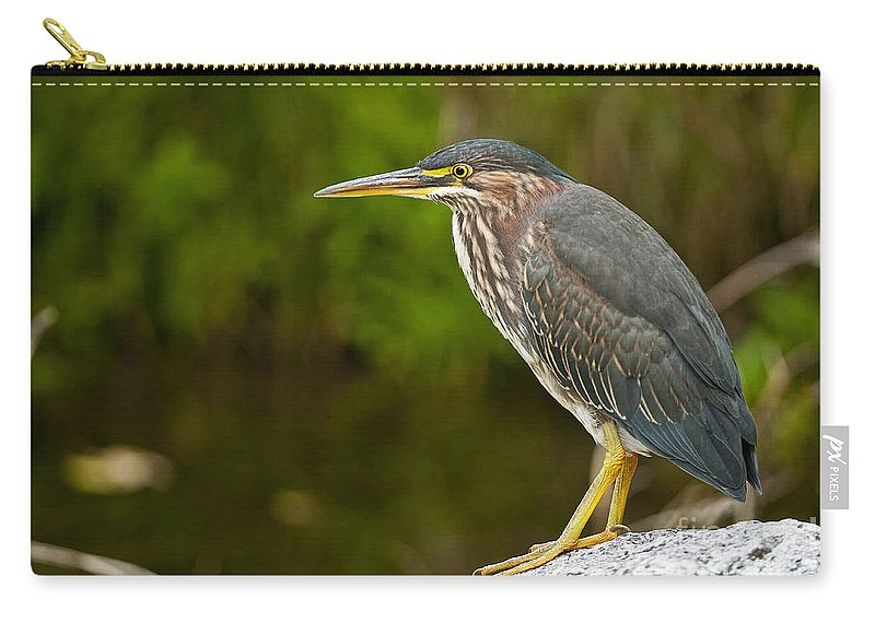 Green Heron Carry-all Pouch featuring the photograph Green Heron Pictures 378 by World Wildlife Photography