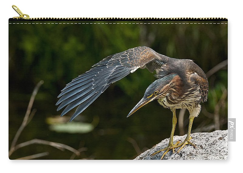 Green Heron Carry-all Pouch featuring the photograph Green Heron Pictures 386 by World Wildlife Photography