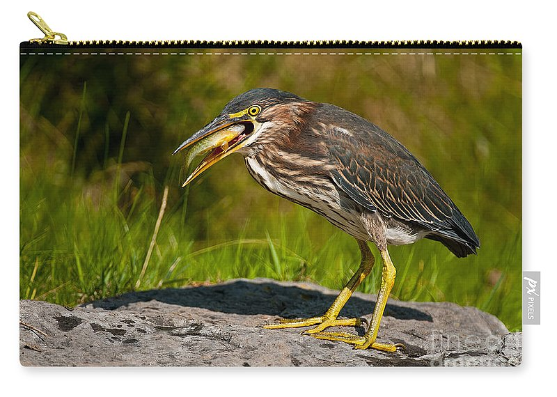 Green Heron Carry-all Pouch featuring the photograph Green Heron Pictures 457 by World Wildlife Photography