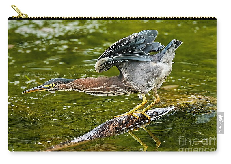 Green Heron Carry-all Pouch featuring the photograph Green Heron Pictures 522 by World Wildlife Photography