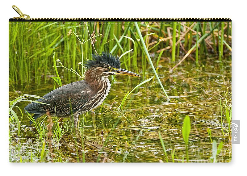 Green Heron Carry-all Pouch featuring the photograph Green Heron Pictures 545 by World Wildlife Photography