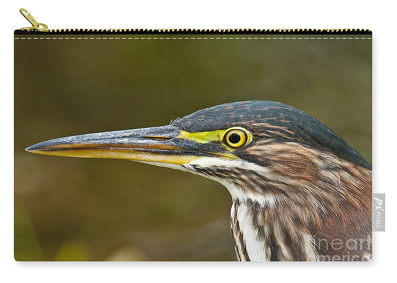 Green Heron Carry-all Pouch featuring the photograph Green Heron Pictures 548 by World Wildlife Photography