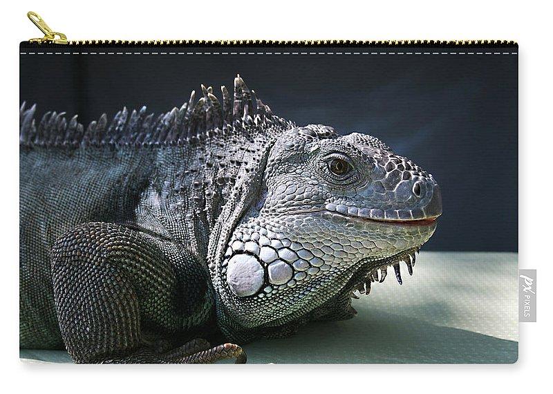 Green Iguana Carry-all Pouch featuring the photograph Green Iguana 1 by Ellen Henneke
