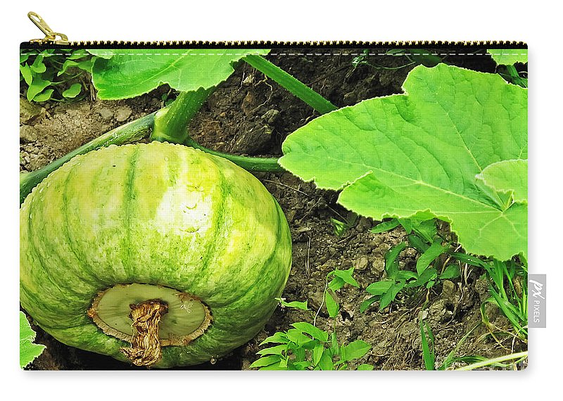 Landscape Carry-all Pouch featuring the photograph Green Pumpkin by Elvis Vaughn