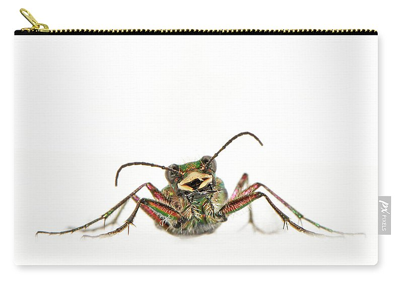 White Background Carry-all Pouch featuring the photograph Green Tiger Beetle by Robert Trevis-smith