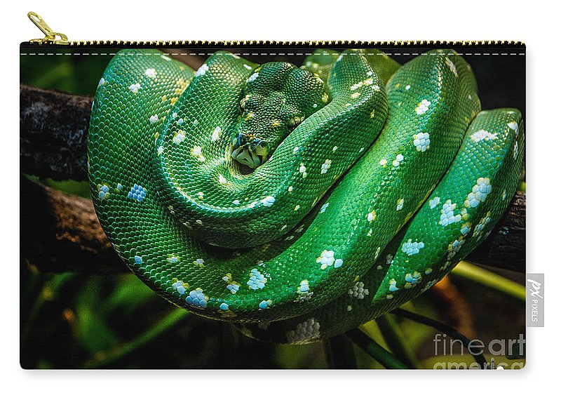 Snake Carry-all Pouch featuring the photograph Green Tree Python by Grace Grogan