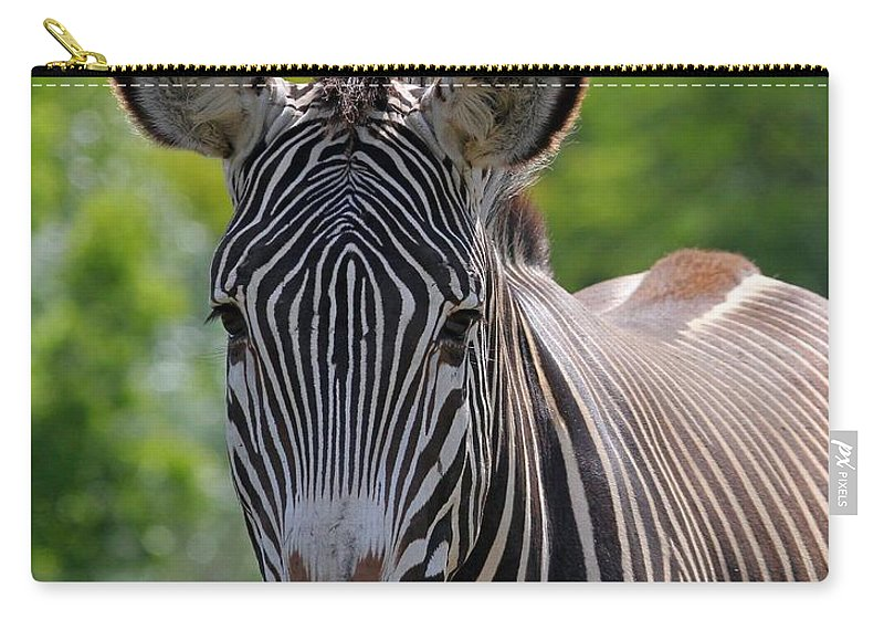 Animal Carry-all Pouch featuring the photograph Grevy Zebra by Davandra Cribbie