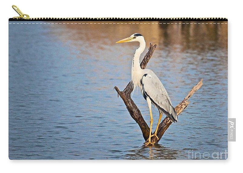 Grey Heron Carry-all Pouch featuring the photograph Grey Heron Ardea Cinerea by Liz Leyden