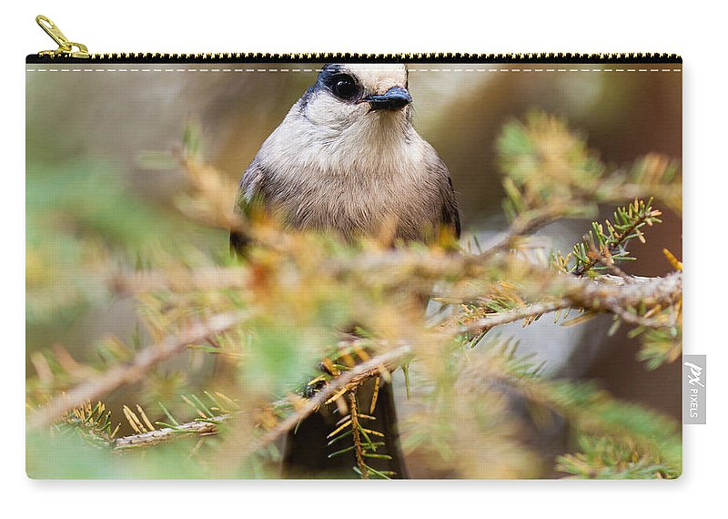 Animal Carry-all Pouch featuring the photograph Grey Jay Perisoreus Canadensis Watching Perched by Stephan Pietzko