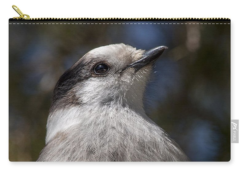 Bird Carry-all Pouch featuring the photograph Grey Jay by Richard Kitchen