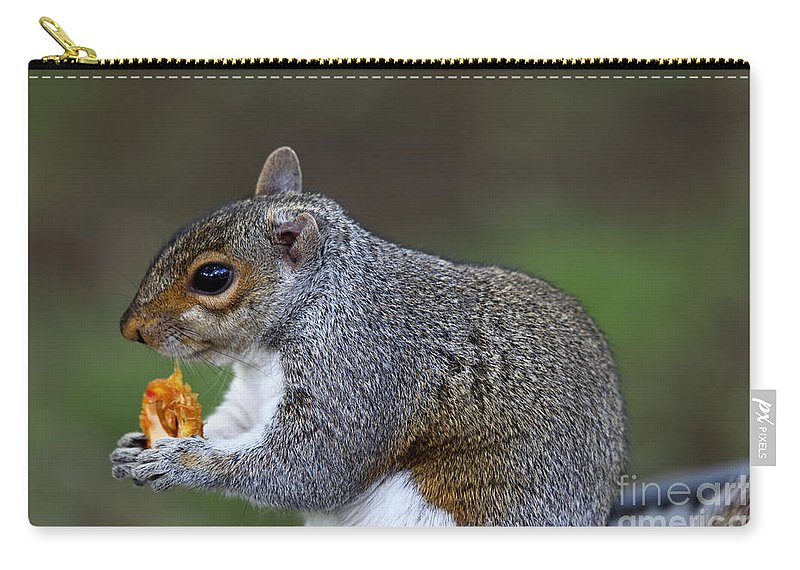 Squirrel Carry-all Pouch featuring the photograph Grey Squirrel Tucking In by James Brunker