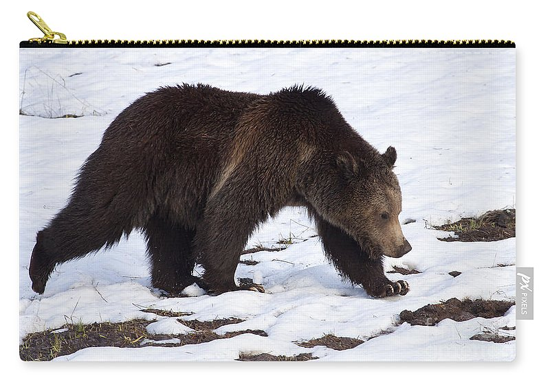 Bear Carry-all Pouch featuring the photograph Grizzly Bear #2463 by J L Woody Wooden