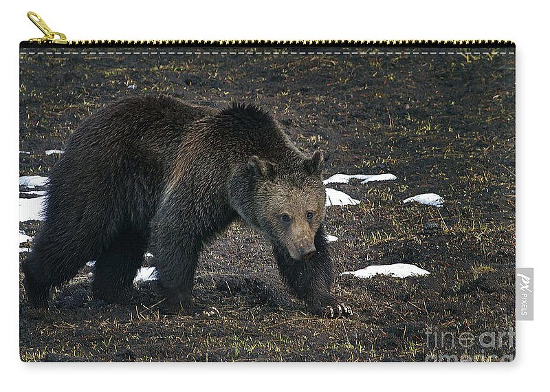 Bear Carry-all Pouch featuring the photograph Grizzly Bear #2510 by J L Woody Wooden