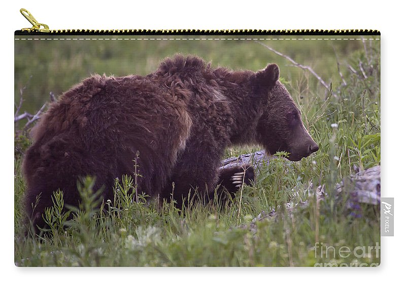 Bear Carry-all Pouch featuring the photograph Grizzly Bear #6192 by J L Woody Wooden