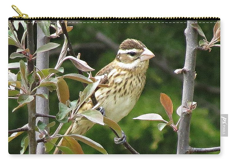Bird Carry-all Pouch featuring the photograph Grosbeak by MTBobbins Photography