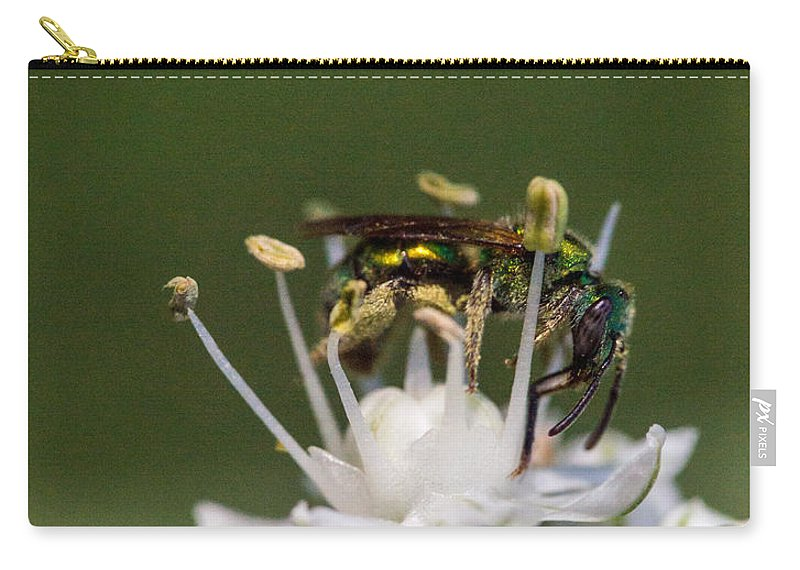 Helicid Carry-all Pouch featuring the photograph Halicid Bee Amongst The Anthers by Douglas Barnett