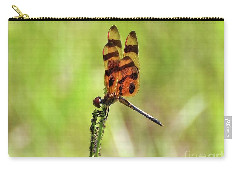 Dragonfly Carry-all Pouch featuring the photograph Halloween Pennant by Al Powell Photography USA