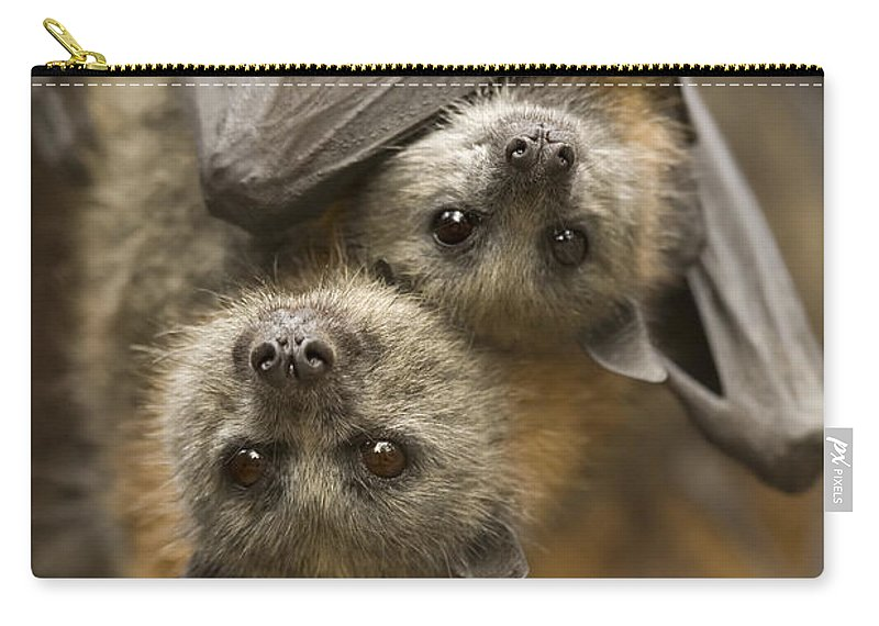 Bats Carry-all Pouch featuring the photograph Hang In There by Mike Dawson
