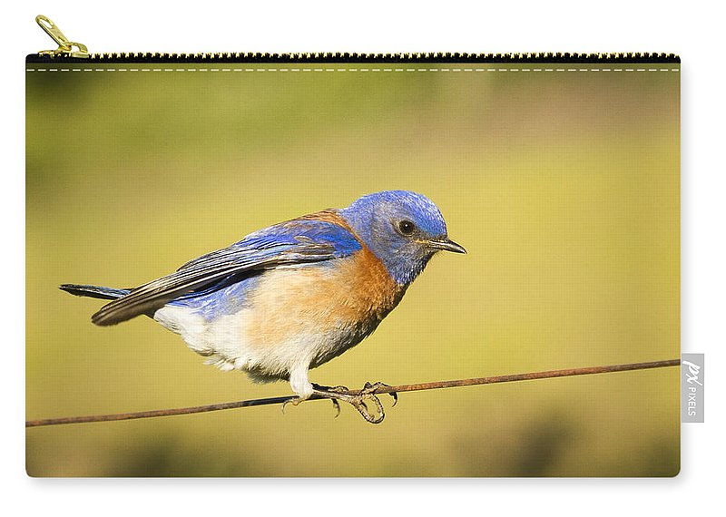 Carry-all Pouch featuring the photograph Hang On by Jean Noren