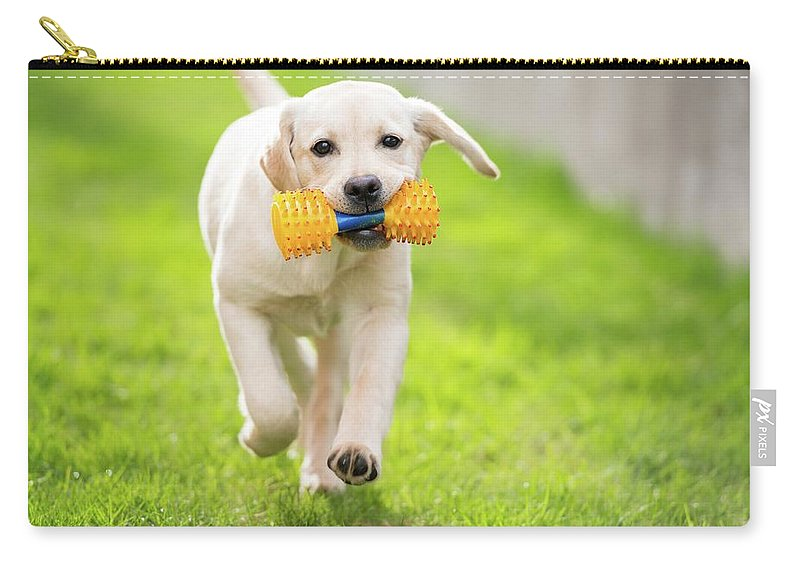 Pets Carry-all Pouch featuring the photograph Happy Hour by Stefan Cioata