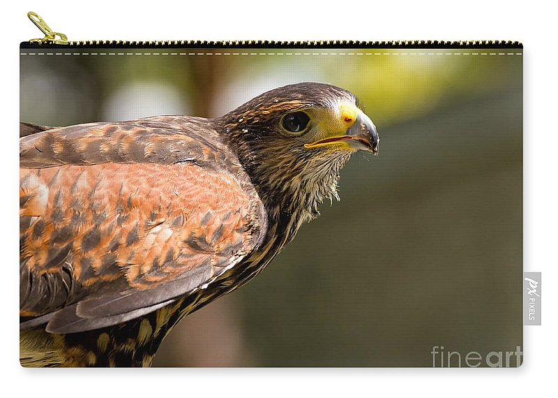 Hawk Carry-all Pouch featuring the photograph Harris Hawk by Les Palenik