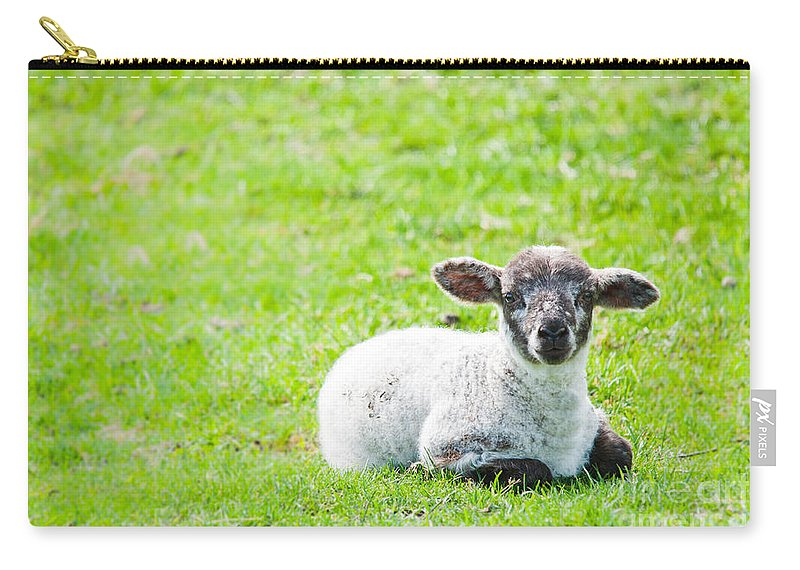 Sheep Carry-all Pouch featuring the photograph Have You Any Wool by Cheryl Baxter