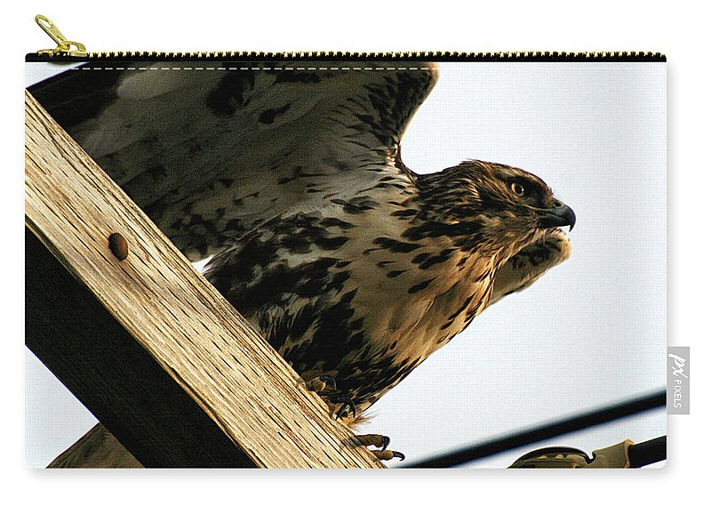 Wildlife Carry-all Pouch featuring the photograph Hawk On Telephone Pole by William Selander