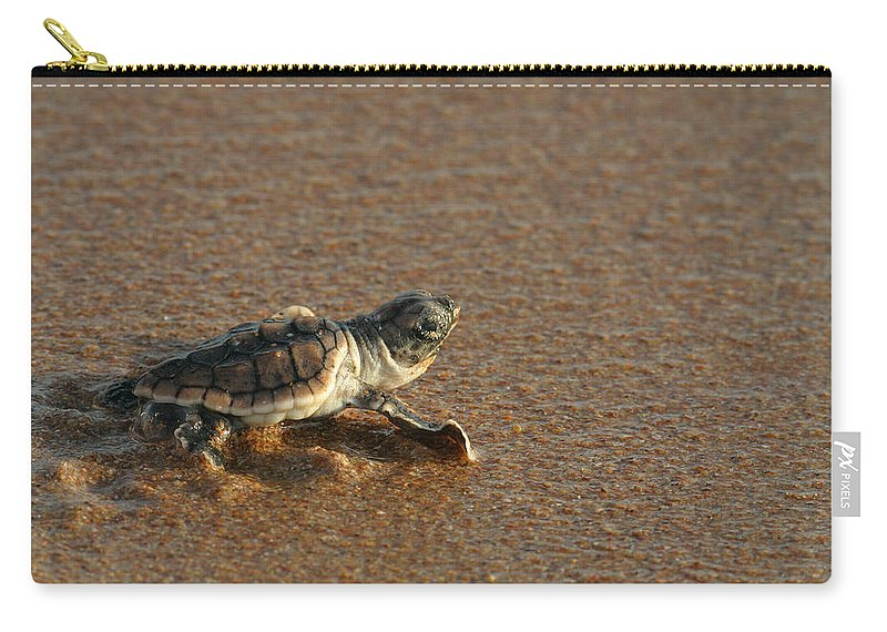 Loggerhead Carry-all Pouch featuring the photograph Heading Out To Sea by Paul Rebmann
