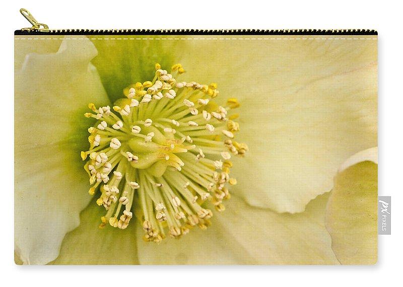 Helleborus Carry-all Pouch featuring the photograph Heleborus 2 by Douglas Barnett