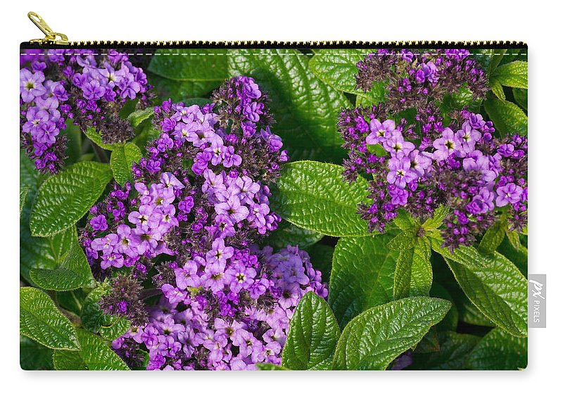 Agriculture Carry-all Pouch featuring the photograph Heliotrope Flowers In Bloom by John Trax