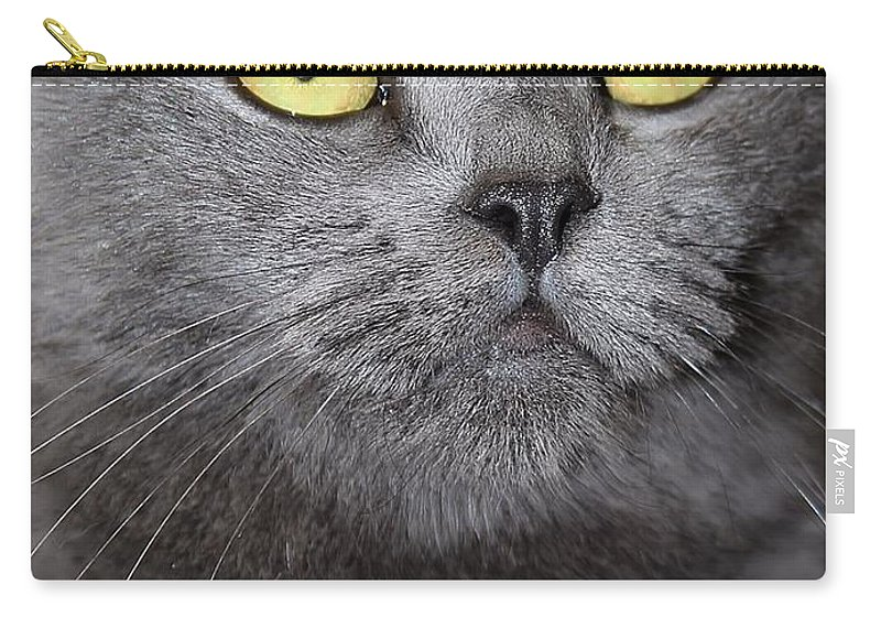 Yellow Eyes Carry-all Pouch featuring the photograph Hello by Joyce Baldassarre