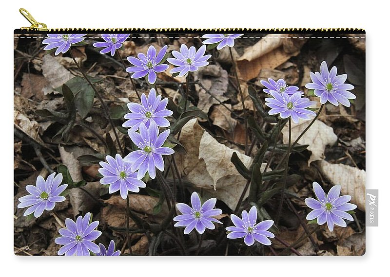 Hepatica Carry-all Pouch featuring the photograph Hepatica by Doris Potter